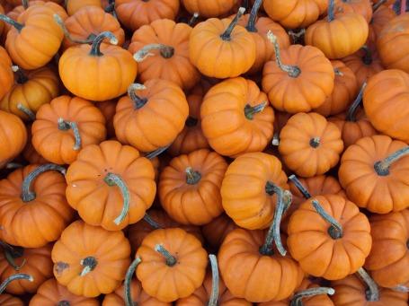 small-pumpkins-616423_1920